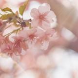エグゼクティブに聞く、「ドラゴン桜は東大に行けと言うけどホント!?」学歴とキャリアに関する意識調査
